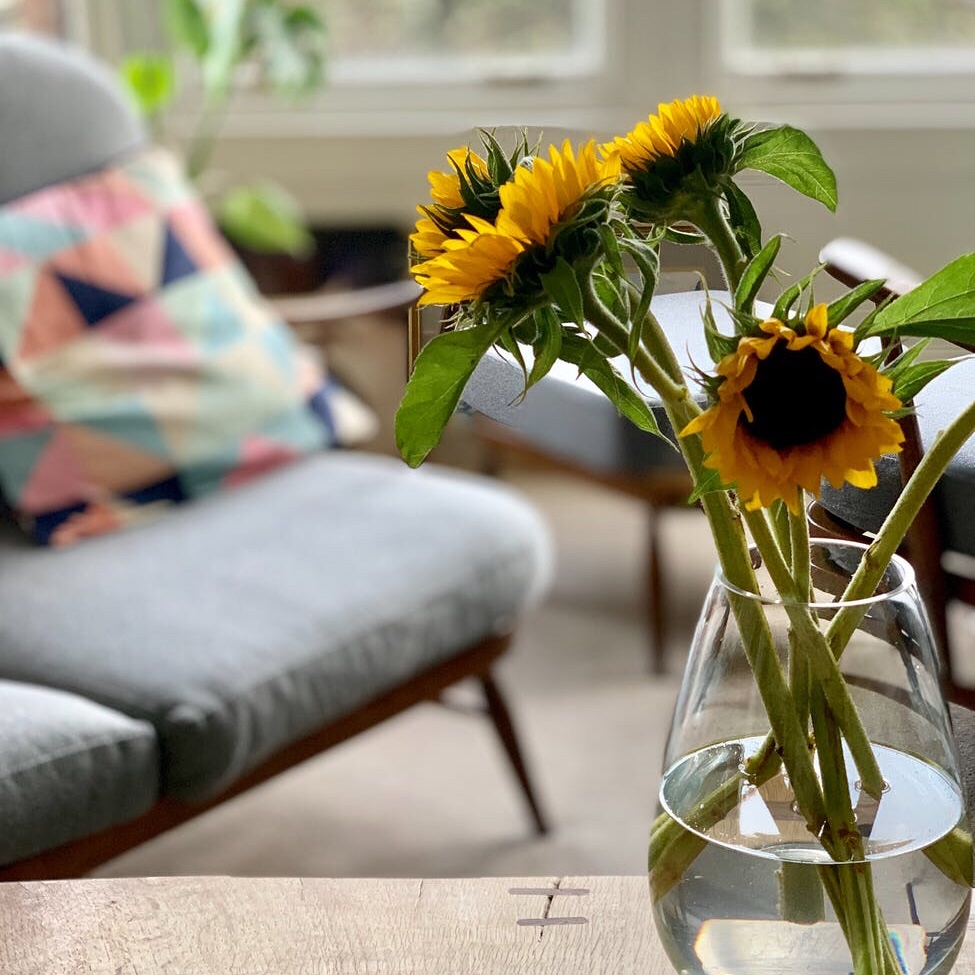 Sunflowers in a Glasgow flat